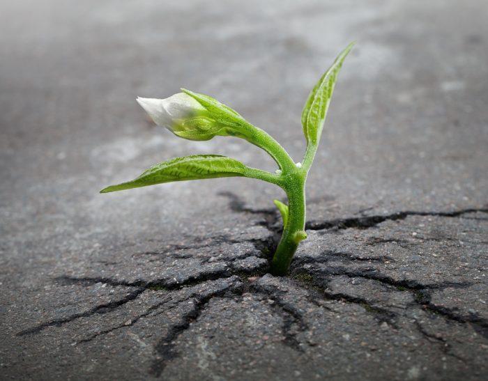 逆境からの回復と成長 -ポスト トラウマティック グロース-